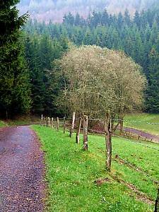 Noch ein Waldweg